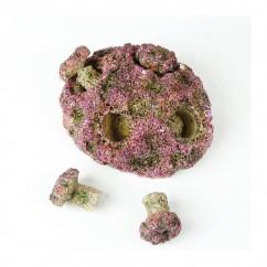 TMC Natureform - Coral Frag Plug Rock
