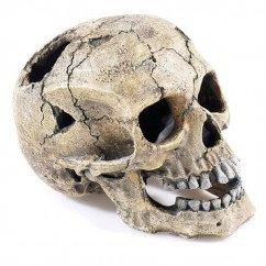 Classic Cracked Skull 2966