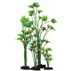 Horn Plant 13cm