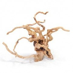 Root-Polished 46-60cm Single Piece