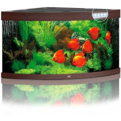 Juwel Trigon 350 Aquarium - Dark Wood
