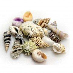 Hobby - Snail Shells Small Set 20