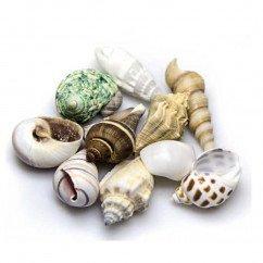 Hobby - Snail Shells Medium Set 10
