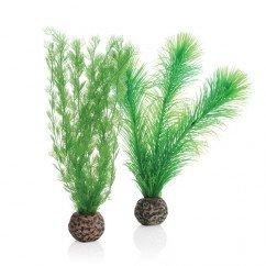 biOrb Green Feather Fern Plants - Small