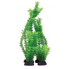 Hugo Kamishi Hornwort Green 40cm