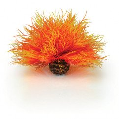 Biorb Flame Sea Lily