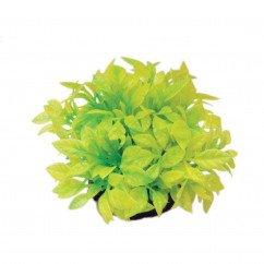 Hugo Kamishi Rose Leaf Yellow 13cm