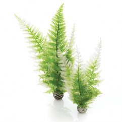 Biorb Easy Plants Winter Fern 2 Pack