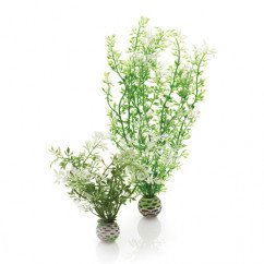 Biorb Easy Plants Winter Flowers 2 Pack